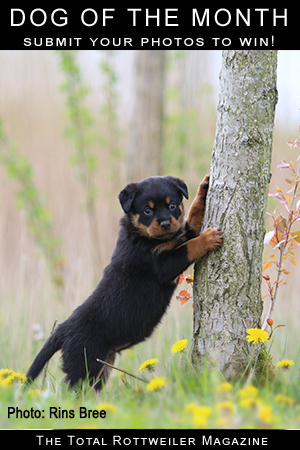 Photo Contests - The Total Rottweiler Magazine