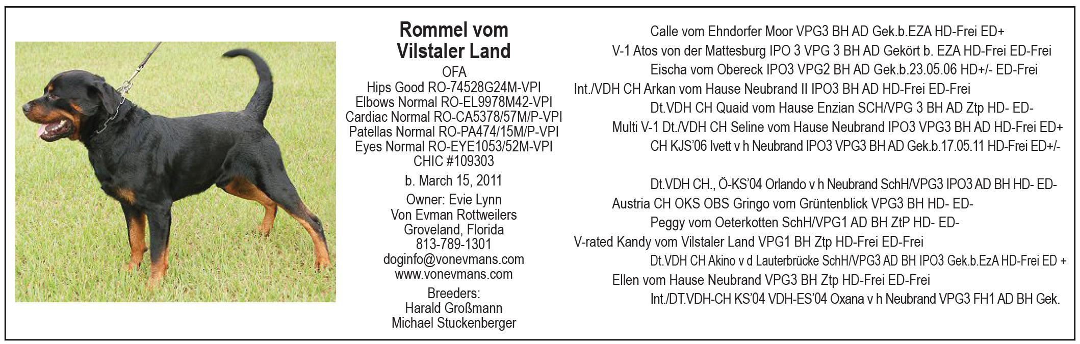Rommel Vom Vilstaler Land The Total Rottweiler Magazine