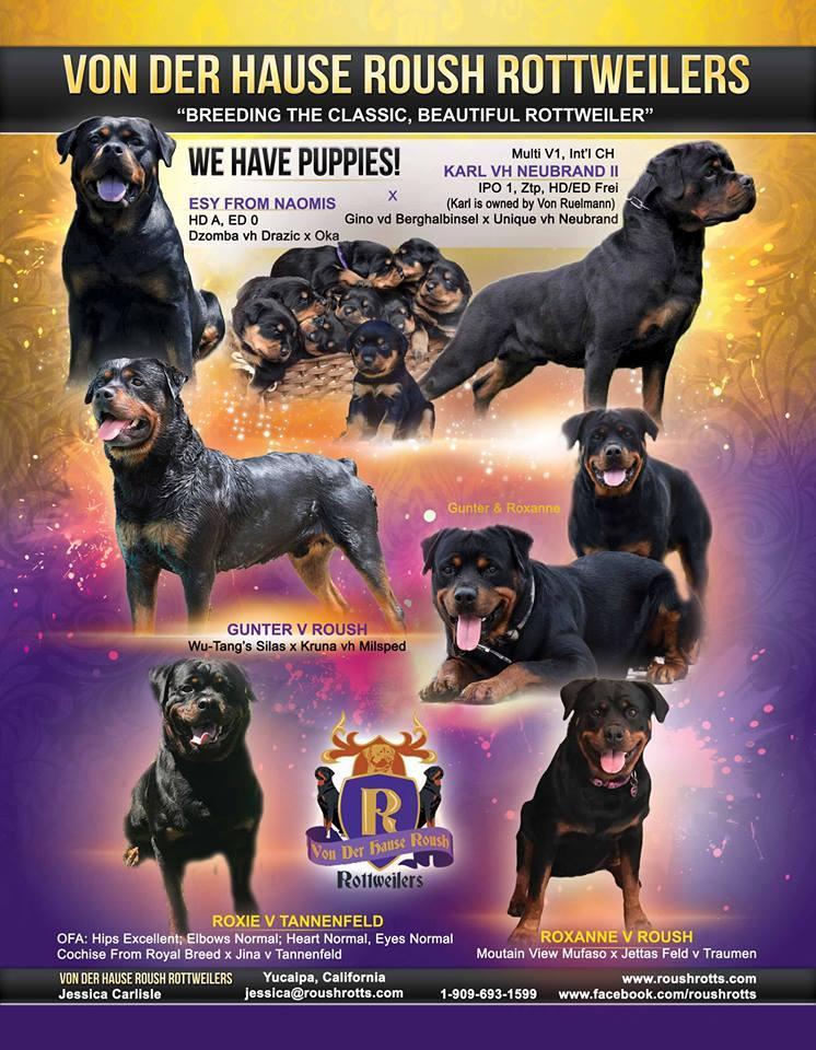 Von Der Hause Roush Rottweilers